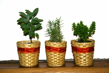 Magical Herbs for Home Protection